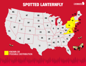 spotted lanternfly map